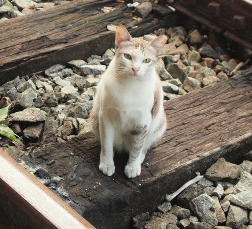 Кот который вернулся домой песня